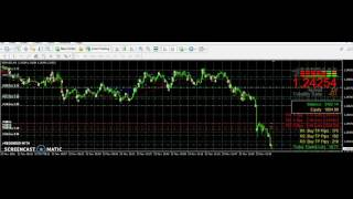 Forex Software $2000 profit a day