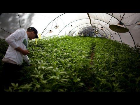 La marihuana le cambió la vida a un hispano en Colorado
