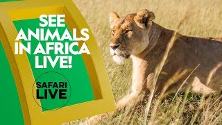 See Animals Live in Africa | Safari LIVE