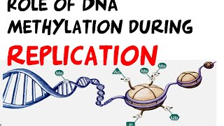 DNA methylation in DNA replication regulation