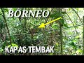 Trik Mikat Burung Kapas Tembakborneo  Mp3 - Mp4 Download