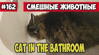 Кот в ванной. Смешные животные, Funny vines подборка 162.