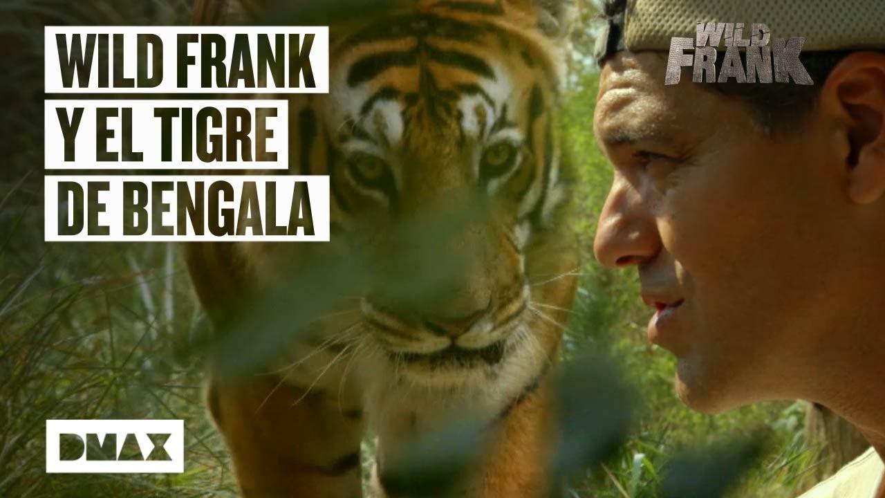 Download Wild Frank viaja a la India para encontrarse con un tigre de Bengala | Wild Frank