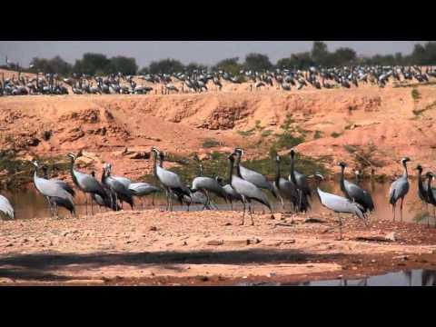 India Motorbike Tour, Rajasthan Deserts #7 Bikaner to Jaisalmer, Desert Roads