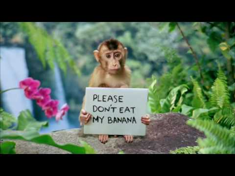 The cutest monkey in the world gainomax youtube the cutest monkey in the world gainomax voltagebd Image collections