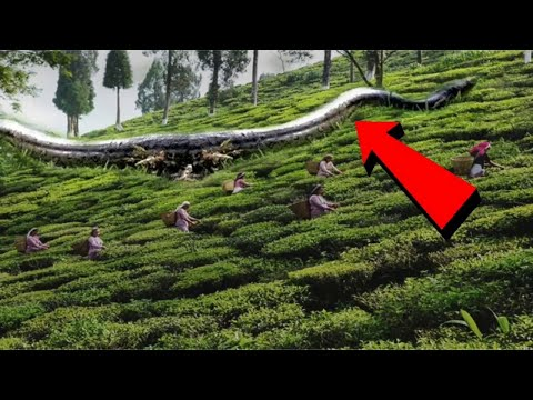 दुनिया के 5 सबसे बड़ा साँप | Largest Snake in the World | Hoax or Real?