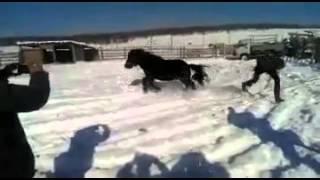 ат айаьаьына. как усмерить дикого якутского коня