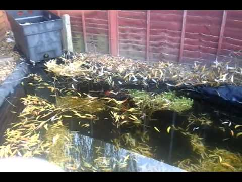 My diy ibc koi quarantine tank youtube for Koi quarantine pond