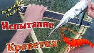 Ловил Креветку а Нашёл Большое Озеро! Рыбалка в Приморье!