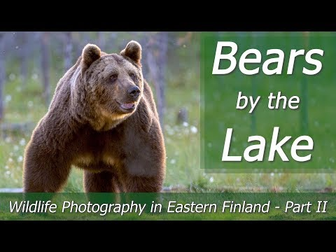 BEARS By The Lake | Wildlife Photography In Eastern Finland - Part 2 | Nikon Z7