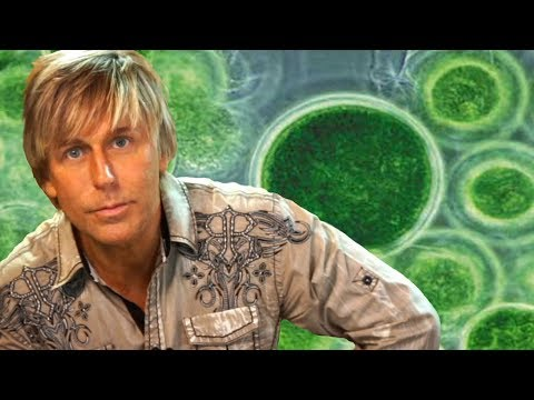 Chlorella, Spirulina, Algae, Pond Scum- Good or Bad?