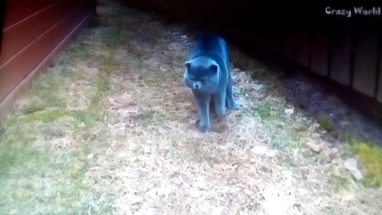 Кот ругается на хозяйку кот космос