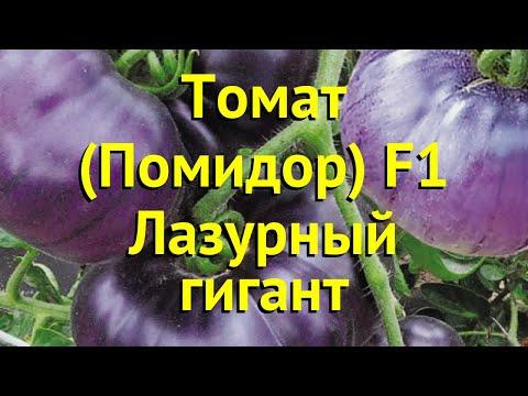 Томат обыкновенный Лазурный гигант. Краткий обзор, описание solanum lycopersicum Lazurnyj gigant