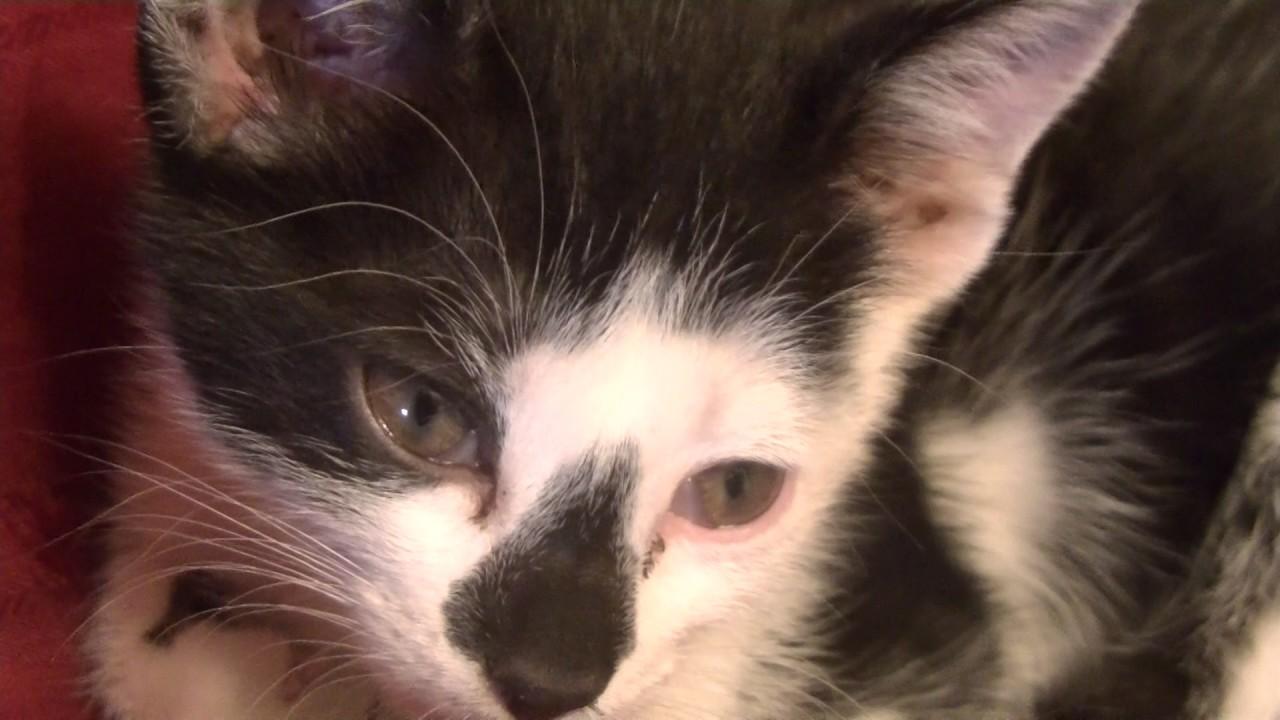 Espiritus carpinteros spot 2 gato youtube for Gato de carpintero