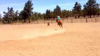 Sorrel reg. Gelding $2,500 ranch horse / break away horse.