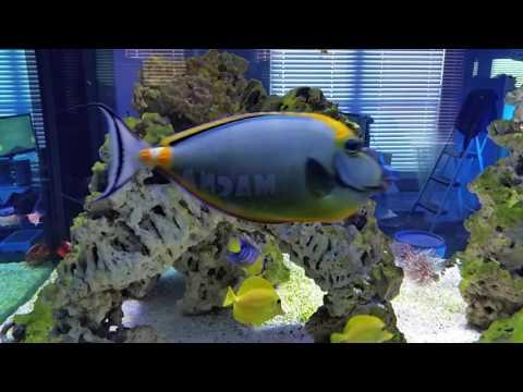 Saltwater Reef: Feeding Time In The 530 Gal