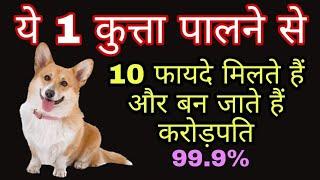 Vastu tips कुत्ते को एक चीज खिलाने से कैंसर जैसी बीमारी खत्म हो जाती है जानिए 10 फायदे