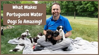 What Makes The Portuguese Water Dog Such a Great Breed?