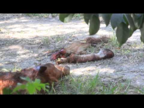 Illegal horse kill area