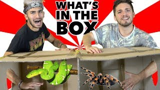 COSA C'È NELLA SCATOLA? - What's In The Box Challenge | Matt & Bise