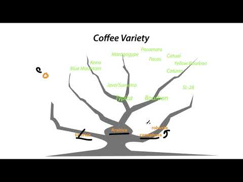 A Simple Explanation about the Coffee Variety