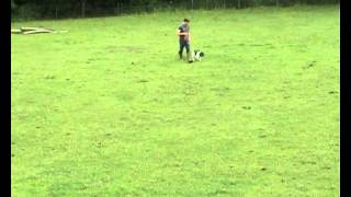 Early Gundog Training With English Springer Spaniel.