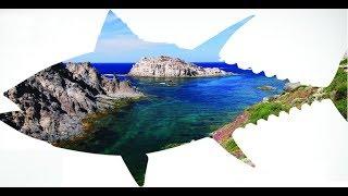 Видео от ловли до продажи тунца как на Дискавери. Испания. Ловля тунца в средиземном море.
