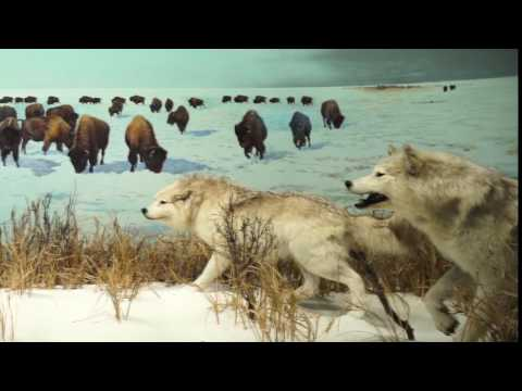 Canadian Museum of Nature - This is Your Place | Ottawa Tourism