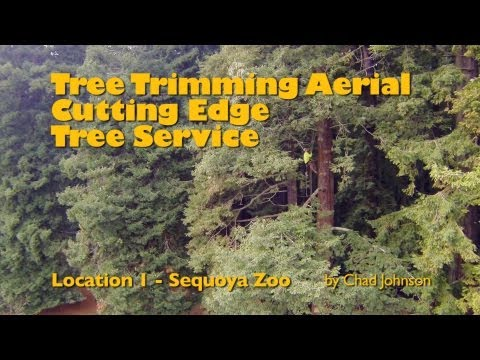 Tree Trimming - FPV Aerial Views - Sequoia Park Zoo
