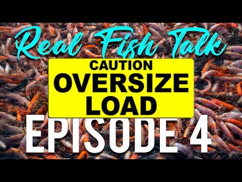 REAL FISH TALK : How Much Is Too Much?