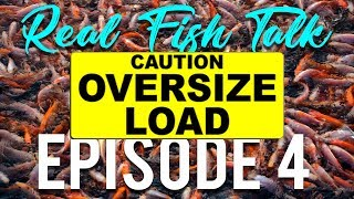 REAL FISH TALK : How Much Is Too Much? thumbnail