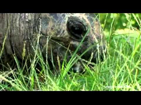 Seychellen: Natur / Seychelles: Nature powered by Reisefernsehen.com - Reisevideo / travel video