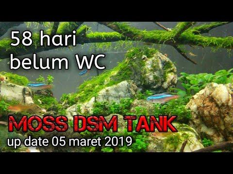 Aquascape Pemula Indonesia Moss Dsm Tank Up Date 10 Maret 2019 Youtube