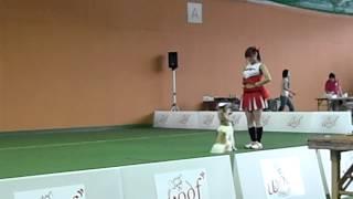 ミックス犬リエとチアダンスに挑戦です!