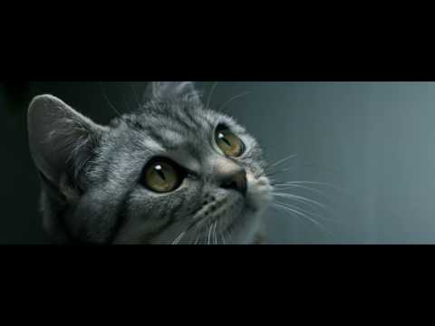 Curious Cats - Drip - Whiskas TV ad