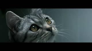 Video Curious Cats - Drip - Whiskas TV ad download MP3, 3GP, MP4, WEBM, AVI, FLV Desember 2017