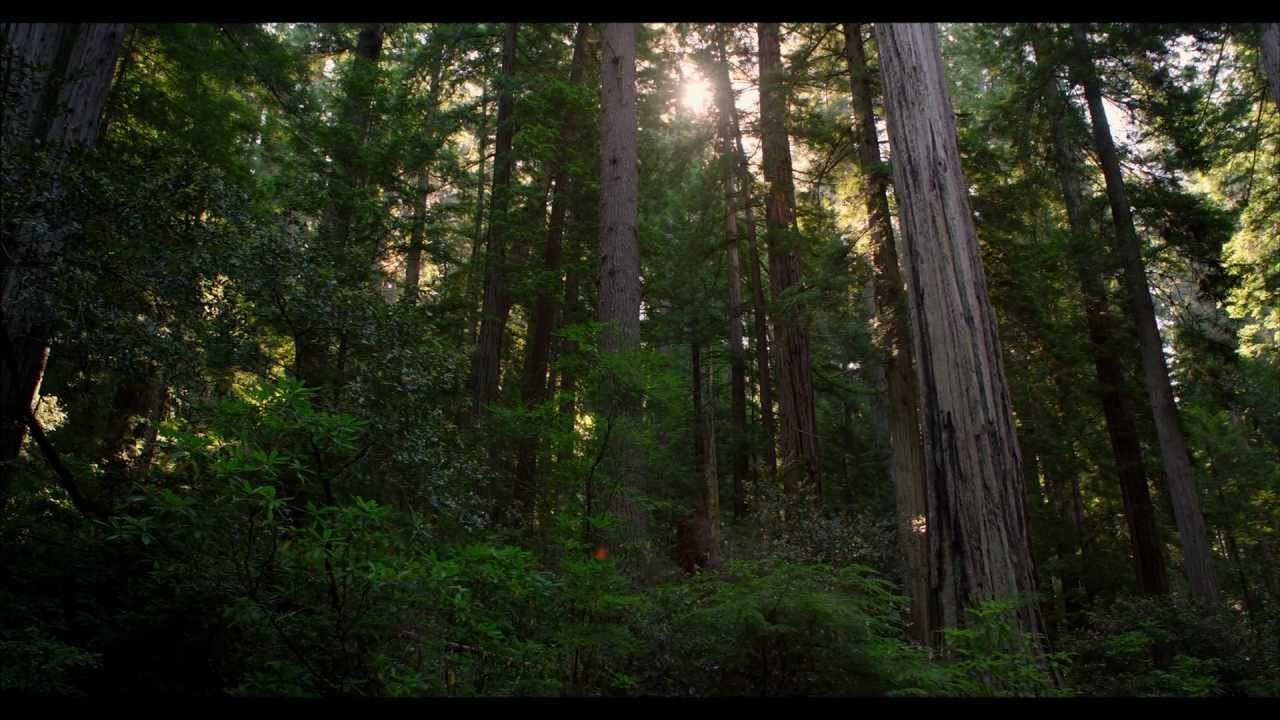 4k Wallpaper 3d National Geographic Redwood National Park In 4k Ultra Hd Youtube