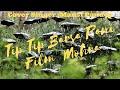 Tip Tip Barsa Pani - Mohra (1994) Full Video Song HD Cover By Mansi Pandey Mix Hindiaz Download