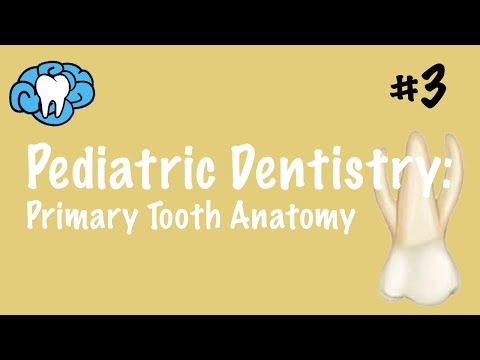 Pediatric Dentistry | Primary Tooth Anatomy | NBDE Part II