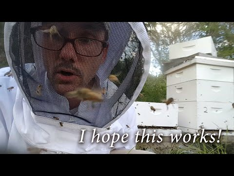 Beekeeping - Splitting an Angry Hive (Africanized Bees?)