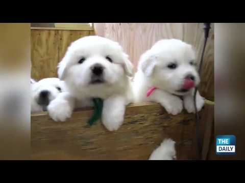 Cutest Puppies of All Time!
