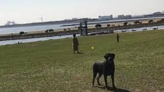 葛西臨海公園#げんきいっぱい#人が居ない水曜日#パワースポット#春#Rott...