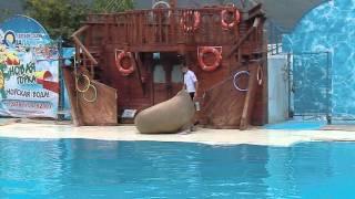 Театр морских животных Акватория. Фрагменты выступлений.Часть 1.Крым. Ялта