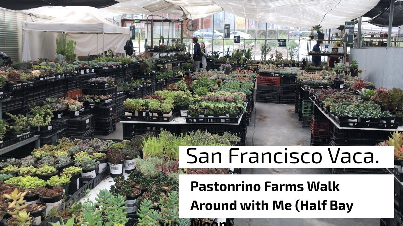San Fran Vacation T E Pastorino Nursery Walk Around With Me Half Moon Bay California