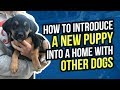 How to introduce a new puppy into a home with other dogs mp3
