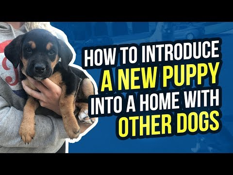 HOW TO INTRODUCE A NEW PUPPY INTO A HOME WITH OTHER DOGS