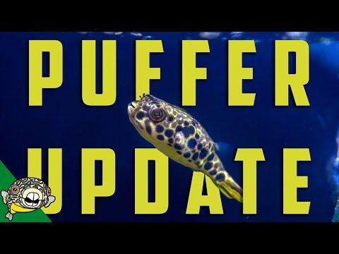 Schoutedeni Puffer Tank Update