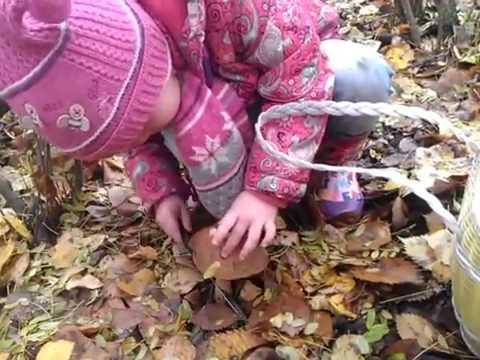первый раз собираем грибы