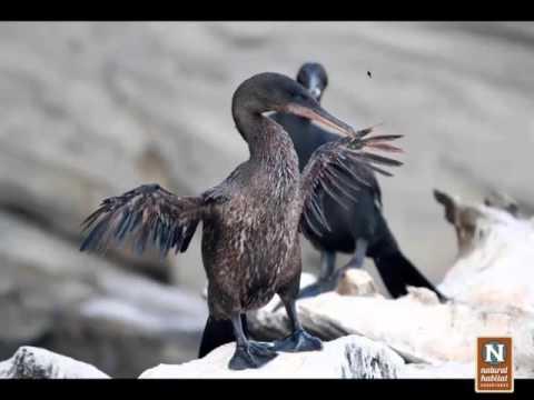 WEBINAR | The Galapagos Islands – A Nature Photographer's Paradise
