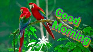 Beautiful Good morning video, Whatsapp status video, Greetings, wishes, quotes, Happy morning,
